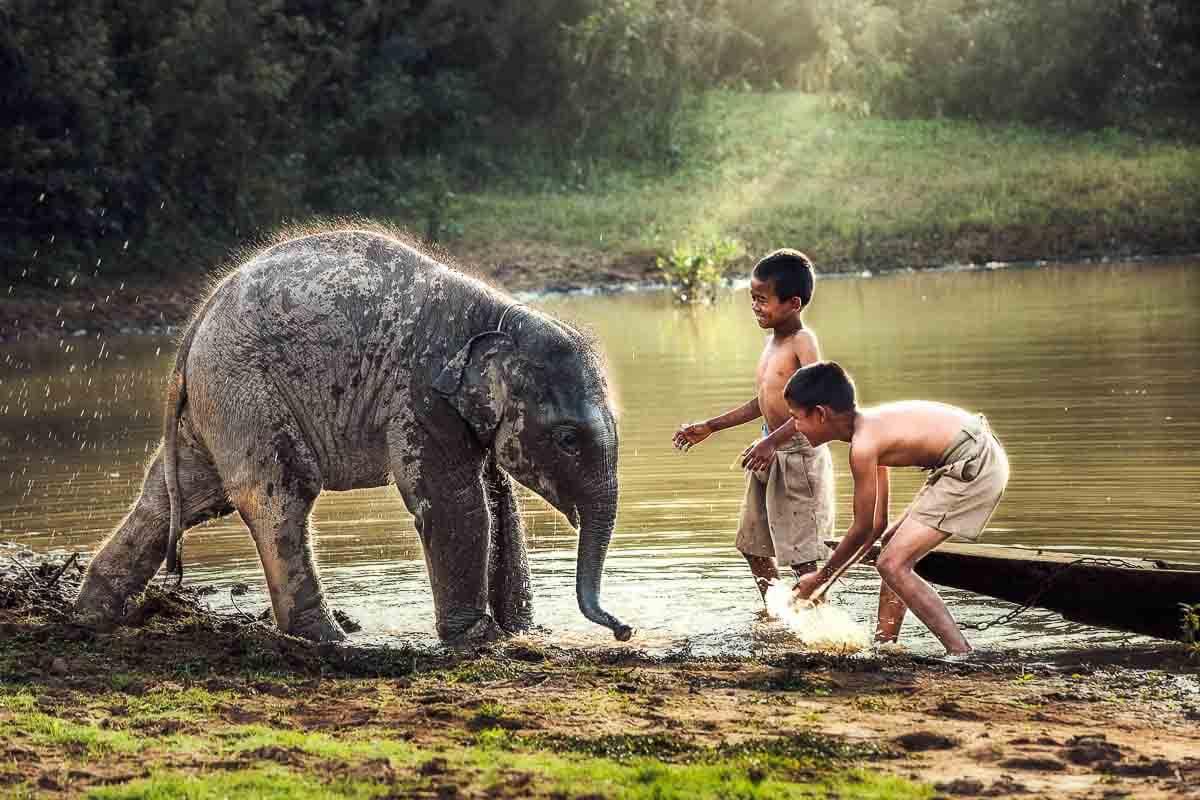 Kinder spielen mit einem Baby-Elefant